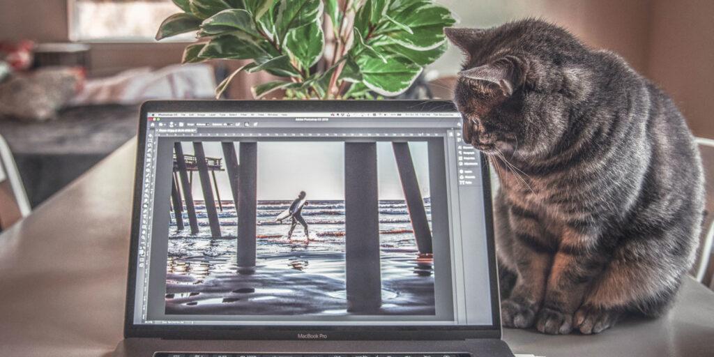 beeldscherm kat